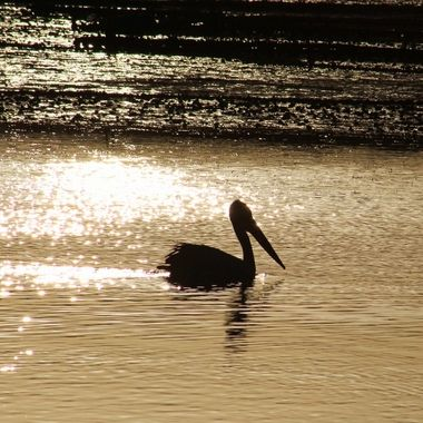 Pelican @ Sunset