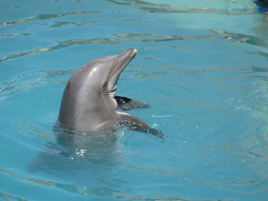 Cozumel Mexico, wonderful dolphin encounter!