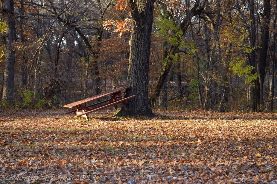 With the falling leaves many parks are preparing to put away picnic tables and benches.  A sure sign that summer is over.