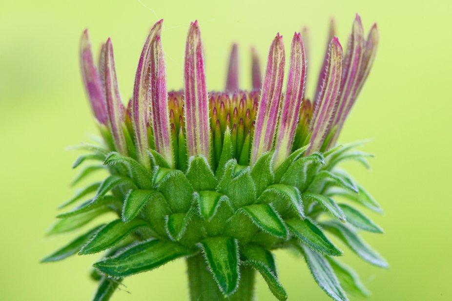 A Flower Crown