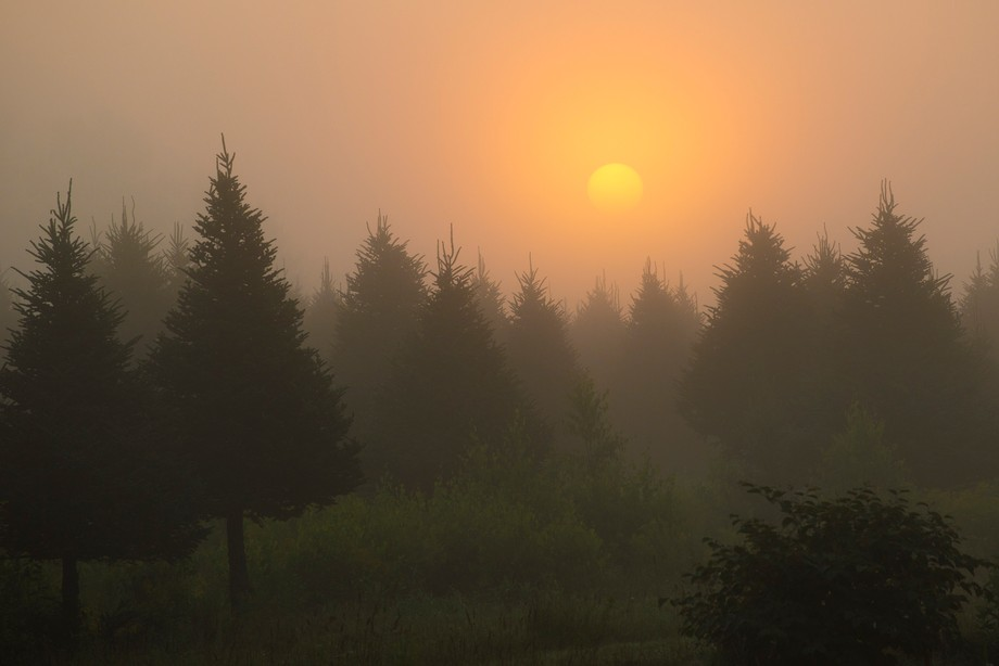 Taken in Quebec on a early foggy morning as the sun was rising.