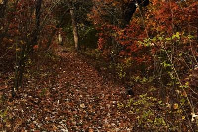 A walk thru the autumn leaves at the Greene Wildlife Reserve