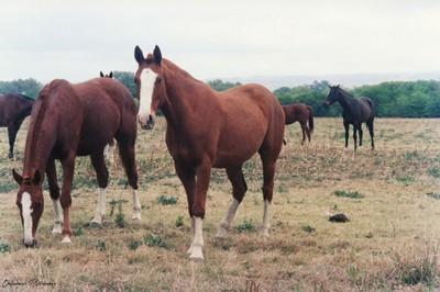 Horses in Cordoba Province in Argentina