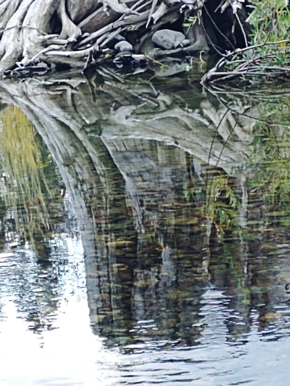 Its a reflection of of a stump on the Goat River, in Creston, BC, Canada