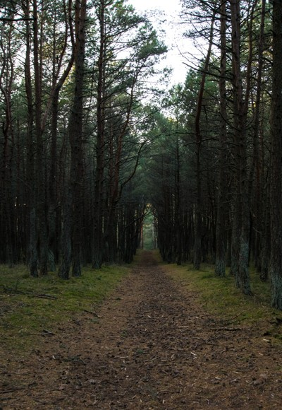 Way through the forest
