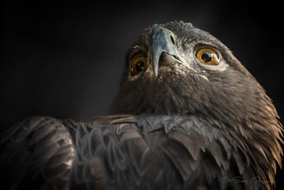 the birds eyes