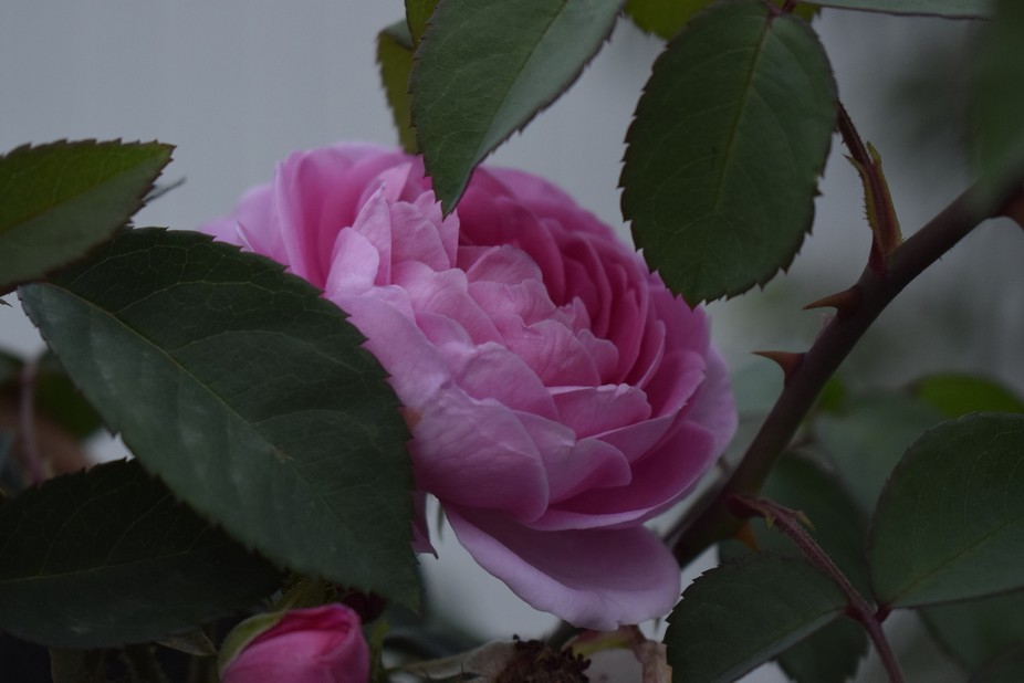 A rose in the desert is like water on mars unless you see it you wont believe it