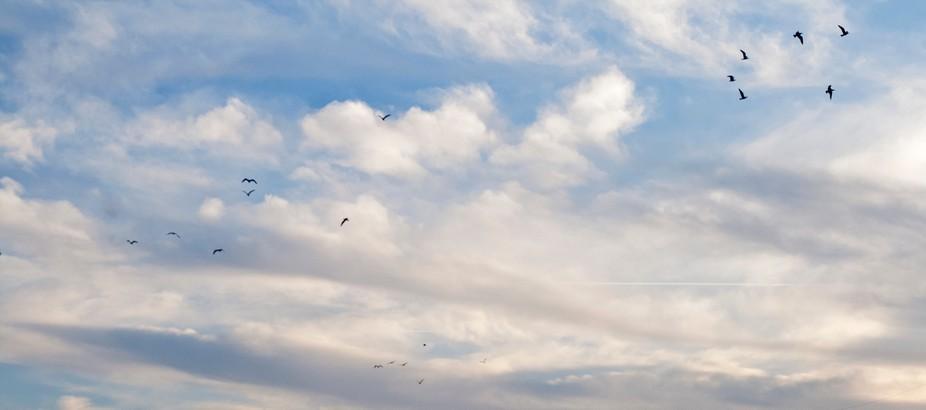 cloud-bird cover