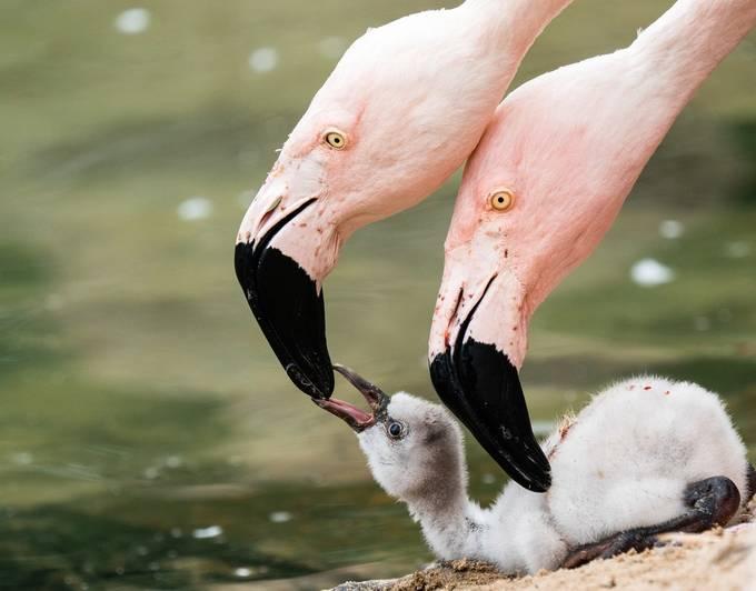 Parent Hood by Divenolte - Wildlife Families Photo Contest