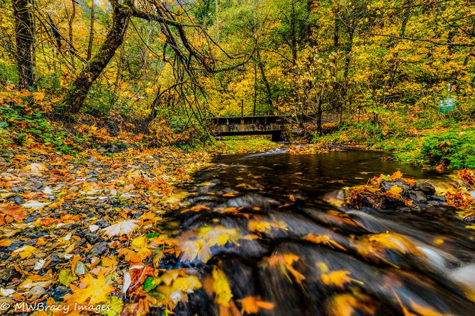 Little stream flowing under a railroad bridgbiae with fallen leaves