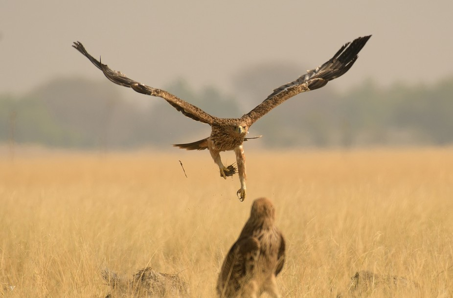 This is one of my best flying shot. It was like one is taking leave from the other and saying goo...