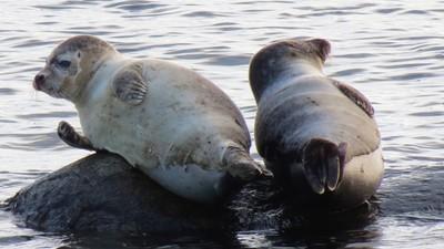 Two seals take a nap.