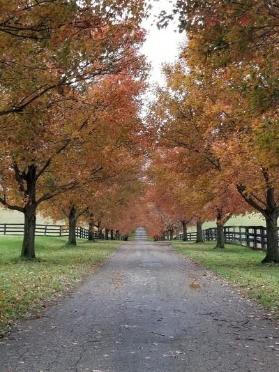 Farm road in the Fall
