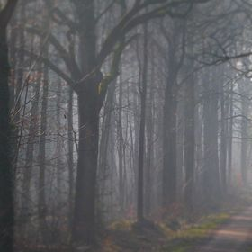 Foggy and Dark Forest