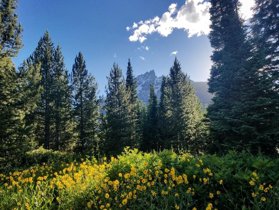 Alta, Wyoming  July 2, 2018