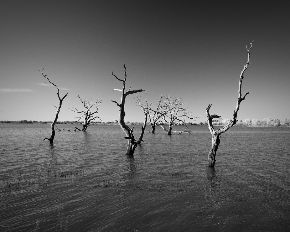 Trees Of The Lake