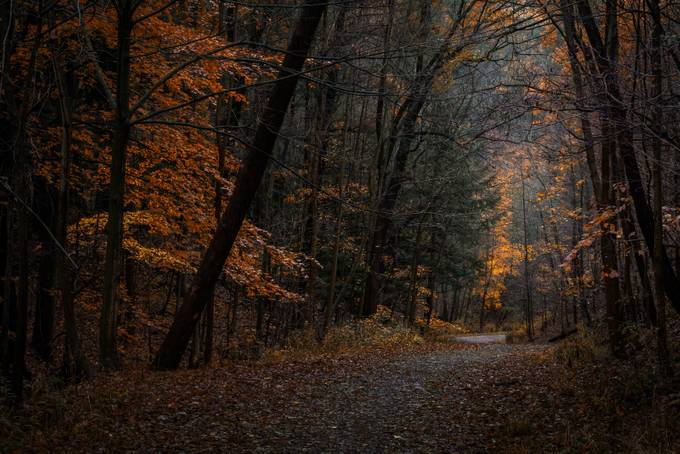 Forest Tunnel by Davehook - Tall Trees Photo Contest