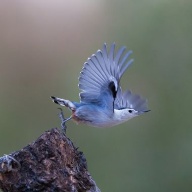 Experimenting with settings for small bird flight shots under non-ideal light conditions.