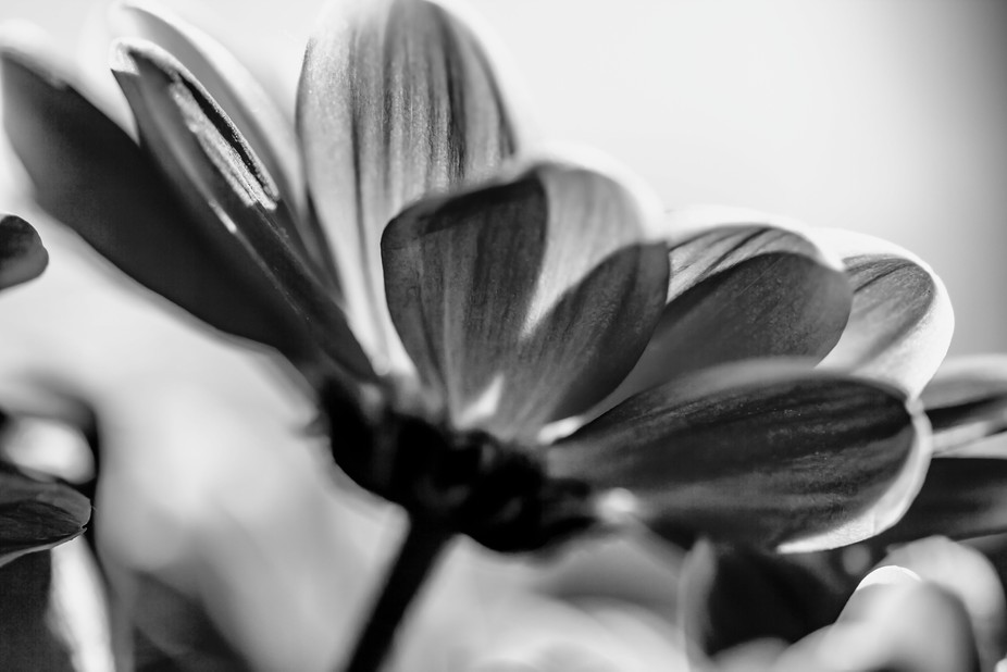 I'm always mesmerised by the beauty of plant structure, The light bleeding through the flower p...