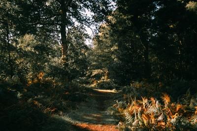 Autumnal Atmosphere