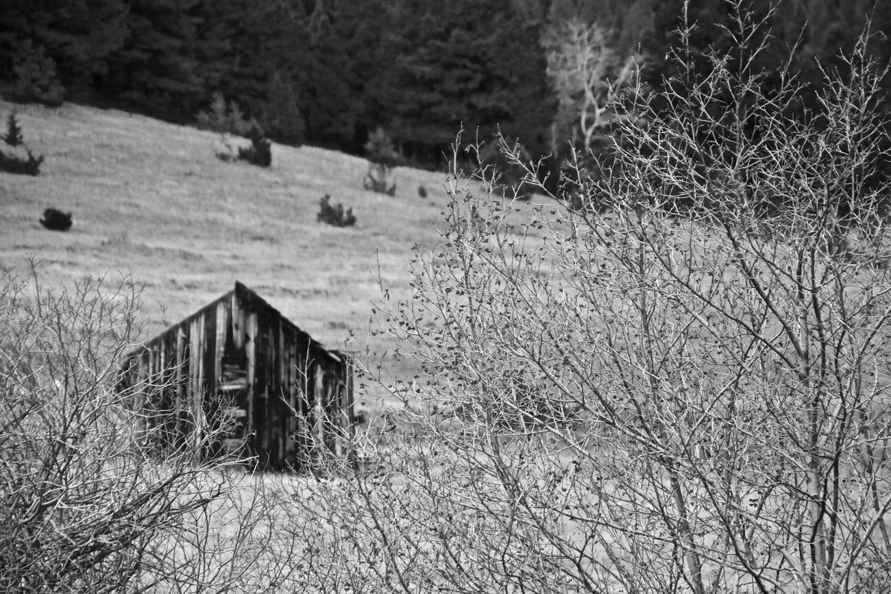 Old cow camp forgotten