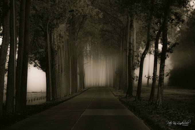 by petervanlonderseele - Tall Trees Photo Contest