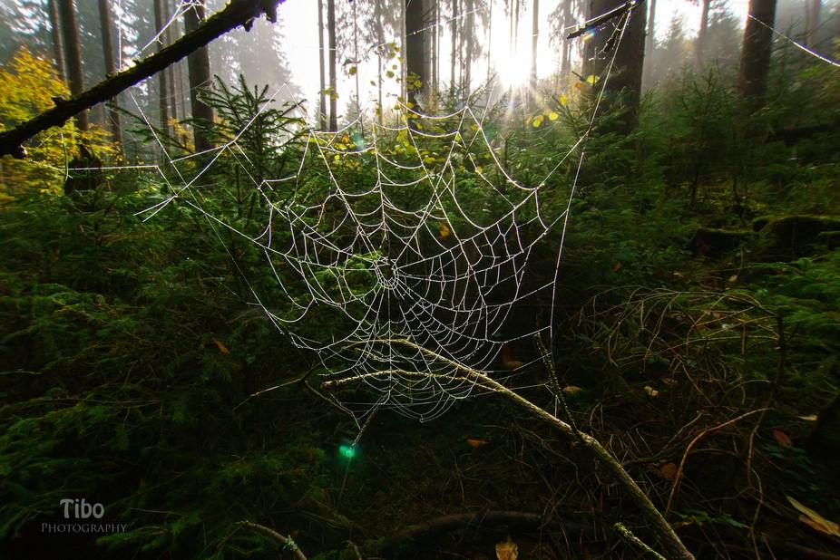 Mystique Spiderweb