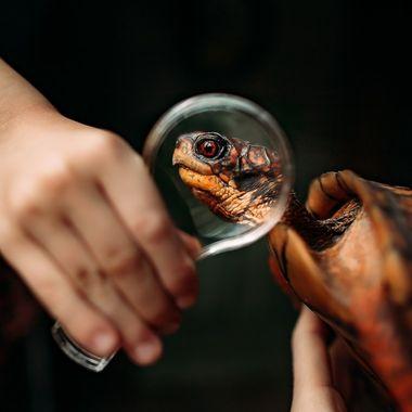 Investigating our pet turtle.