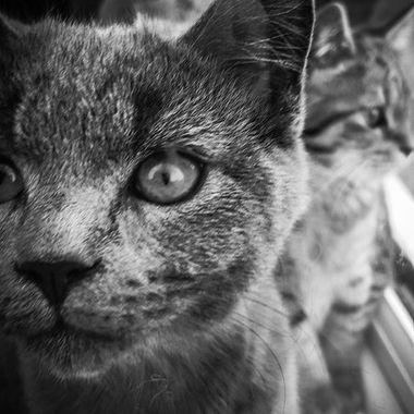 Kittens through the window