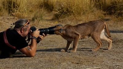 How to shoot a Macro of a Caracal