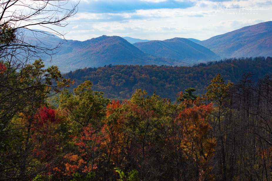 From the Roaring Fork Motor Trail outside Gatlinburg, TN showing the aftermath from the 2016 fore...