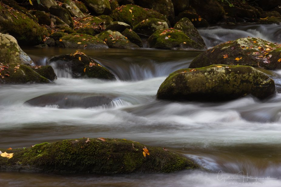Silky water flows across fallen leaf covered rocks in a river in the Great Smokey Mountains Natio...