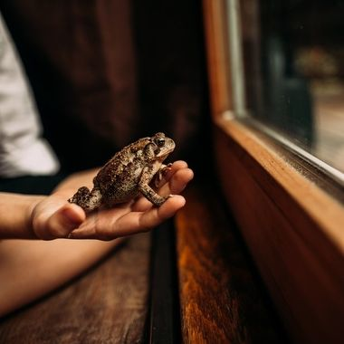 My son caught this brown toad, he enjoyed spending a rainy afternoon with his new friend.