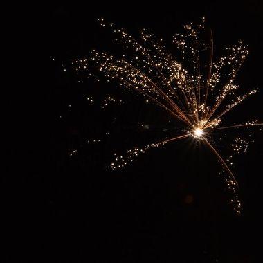 firework 2481