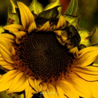 edited sunflower