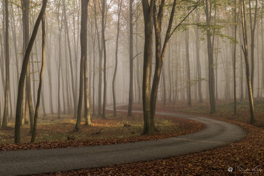Foggy morning in the forest, Slovenia