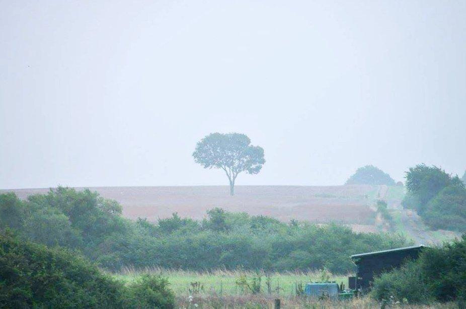 Es kam gerade ein Unwetter auf und hüllte den alleinstehend Baum in Nebel