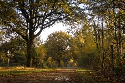Autumn Path Bergerheide