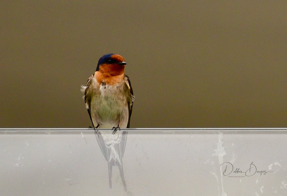 sitting on a glass handrail, looking gorgeous for me.