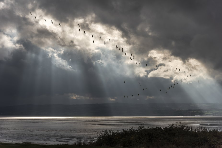 Whilst walking on the clifftop at Thurstaston, Wirral, UK, I spotted this flight of birds wheelin...
