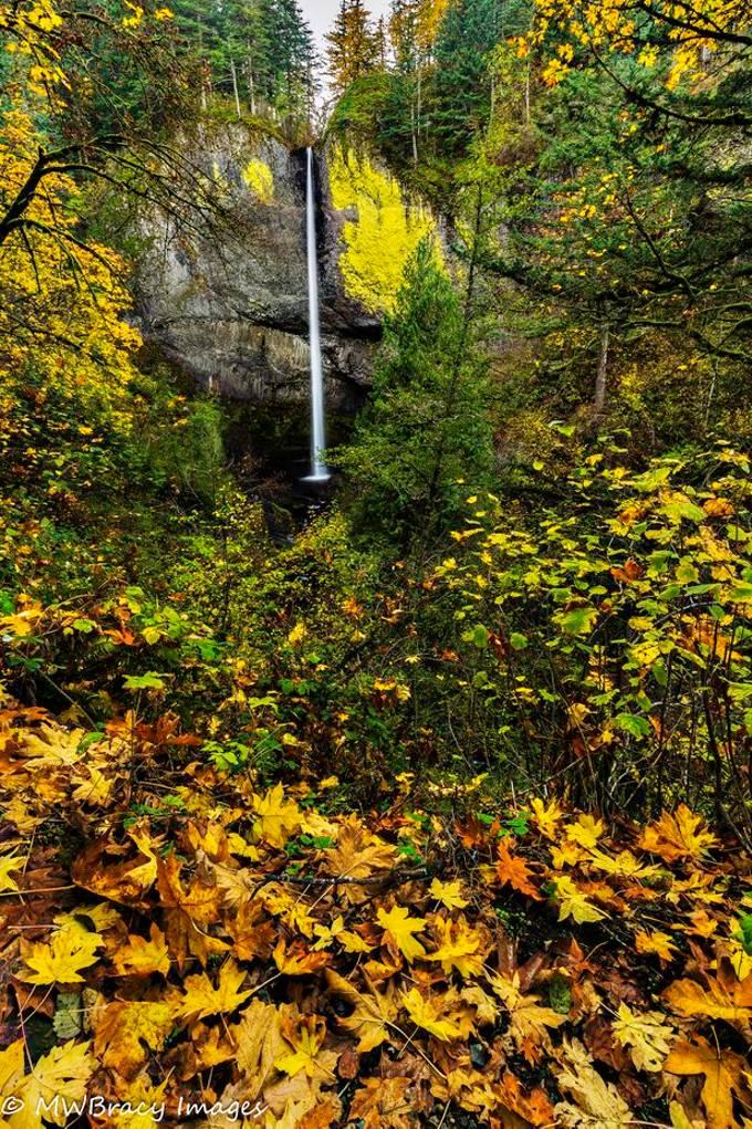 Latourell falls with fall foliage