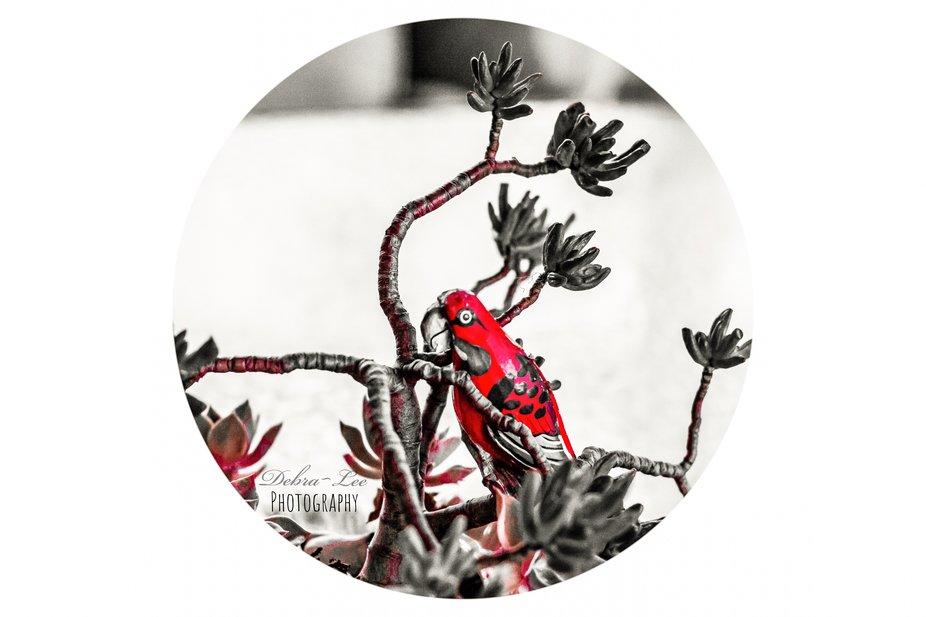 Scarlet Wooden Painted Birdie