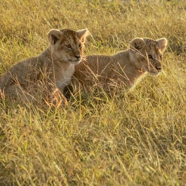 Sunrise Cubs