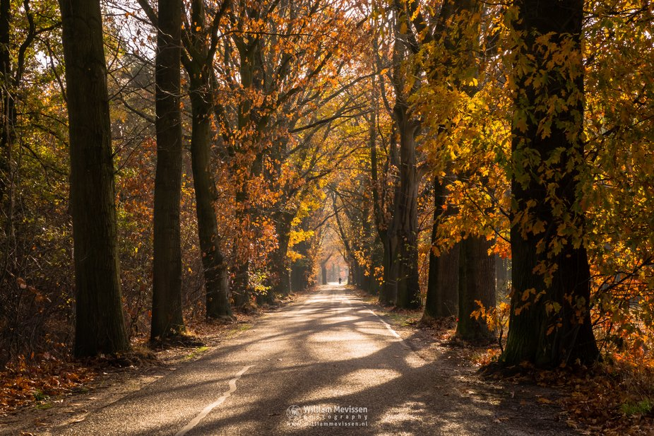A beautiful autumn morning at the road Oude Baan, close to nature reserve Bergerheide, part of Na...