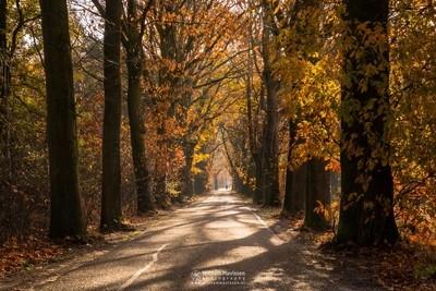 Autumn Oude Baan Nieuw Bergen