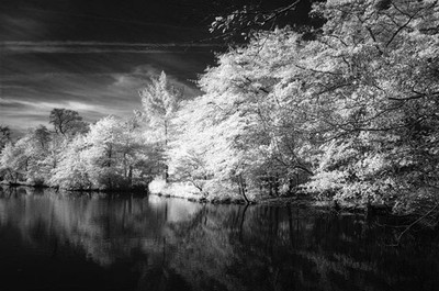 Bayard Cutting Arboretum, reimagined in black and white  Nikon D70 - 590 nm IR  #infrared  #infrared_images #infraredphotography #CreativeIR #lifepixel  #nikon #luminar #landscape  #bnw  #bnwphotography #bnw_captures #bnw_planet #bnwlandscape #bnwmood