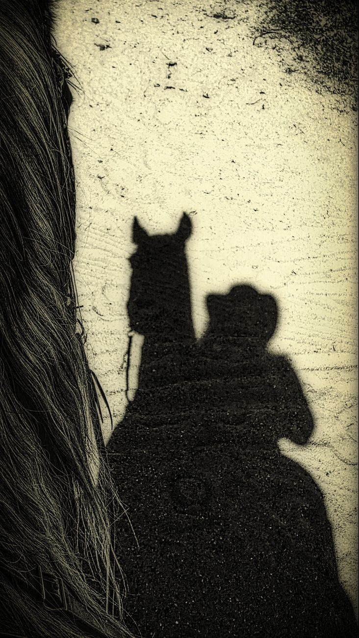 My beloved mare Ellie & I - we really are one when we ride - I purchased her when she was 4 and she is now 31. Photo shot when we were out on the path and looked down and thought what a great shadow selfie!