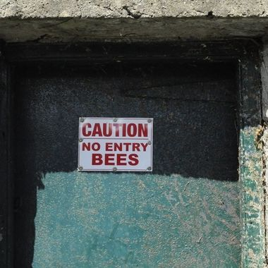 Some pretty tough bees in my home town