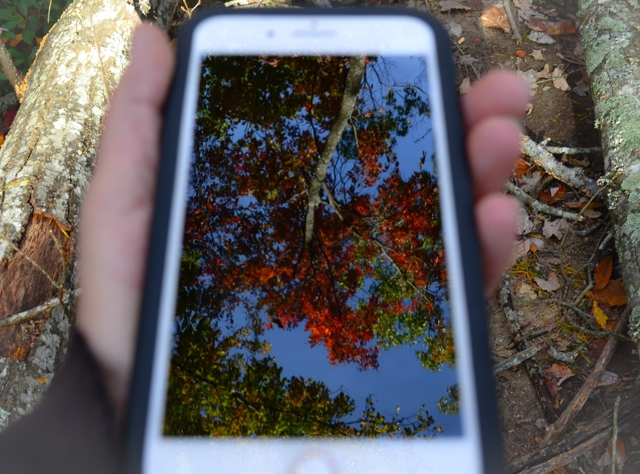 Went to check our time as we were hiking and noticed the reflection on my phone screen.