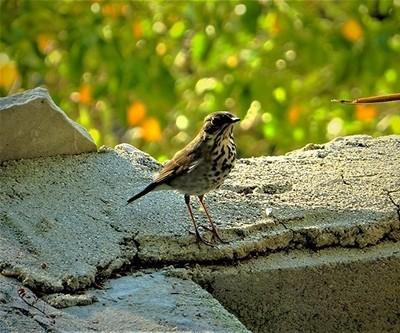 Wild Bird In Topanga Canyon